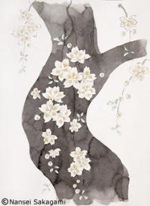 『しだれ桜』